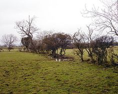 Decaying hedges mark the lines of the straight field boundaries created by the 1768 Parliamentary Act of Enclosure of Boldron Moor, County Durham. Agricultural Revolution, Common People, Natural Resources, Hedges, Geology, Agriculture, Geography, 18th Century, Durham