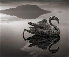 真實的冥河!坦尚尼亞「石化湖」 動物泡水變雕像 | 鄉民讚報 LIKE NEWS