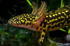 Estudian diversidad de anfibios en Nayarit