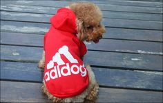 Find More Dog Clothing Information about 2014 Pet clothing factory outlet dog clothes dog fleece adidog fleece pet dog clothes 6 colors free shipping CW06,High Quality clothes hoodie,China clothes set Suppliers, Cheap clothes iron from set a high value on your time on Aliexpress.com