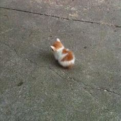 Cute Baby Cats, Cute Kittens, Cute Little Animals, Cute Funny Animals, Cats And Kittens, Funny Cats, Cute Babies, Adorable Puppies, Gatos Cool