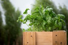 Herb - a - licious Sauces, Dips, Plate, Herbs, Food, Kitchens, Plates, Hoods, Meals