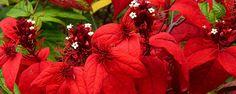 Natal: Decorando com Plantas - As Plantas na Decoração de Natal Colocando o jardim no clima do Natal O Natal está se aproximando, nos contagiando com seu espírito de solidariedade e amor. Nestes momentos que antecedem a grande data festiva sentimos um grande prazer em enfeitar toda a casa com o objetivo principal unir a fam... - http://www.investimentointeligente.com.br/ecoblog/2016/12/25/natal-decorando-com-plantas/