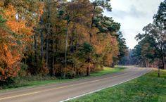 Title: Milepost 113 Photographer: Lane Rushing Date Photo Taken: November 2013 Natchez Trace, Photo Contest, Mississippi, November, Country Roads, Fall, Photos, November Born, Autumn
