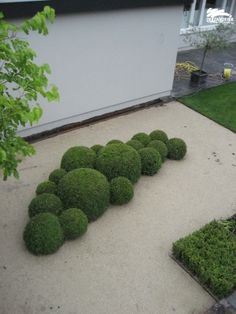 Box balls. I love the architectural design of this planting, the spheres against…