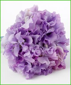 Lilac Sweet-pea so simple yet so pretty and with a beautiful scent