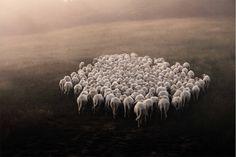 """Marco Sgarbi nasceu nos subúrbios de Milão, e formou-se em Arquitectura. Trabalhou durante 10 anos num estúdio de Design, embora fosse um trabalho onde não se sentia realizado. """"Fugiu"""" para os Alpes, onde trabalhou nas montanhas, enquanto reflectia sobre uma possível mudança de vida. Entretanto conheceu John, um pastor descendente de gerações ligadas ao pastoreio, e experimentou um estilo de vida completamente diferente. A vida no campo é """"muito dura fisicamente, mas compensadora ..."""