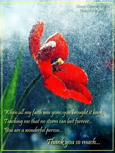 When all my faith was gone you brought it back, teaching me that no storm can last forever... You are a wonderful person... Thank you so much...