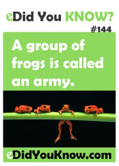A group of frogs is called an army. Fun Facts For Kids, Wtf Fun Facts, True Facts, Strange Facts, Random Facts, Did You Know Facts, Things To Know, What The Fact, Weird But True