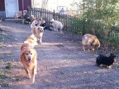 Senior Dog Sanctuary