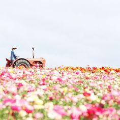 Felt like I died and went to heaven seeing this picture - woman on a tractor in a field of flowers - what is better - OK some chocolate!