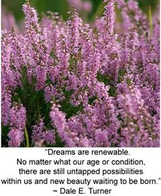 "Celtic meaning of Heather:  ""Dreams are renewable.  No matter what our age or condition, there are still untapped possibilities within us and new beauty waiting to be born.""  ~Dale E. Turner    http://www.whats-your-sign.com/celtic-meaning-heather.html#"