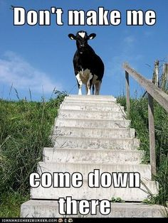 You Don't Want Me to Moo-ve Myself Down There