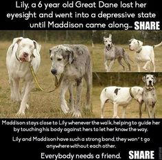 Aww.. True friends help each other, stay forever, and love.
