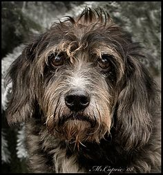 Looks like my childhood dog, Chauncy.
