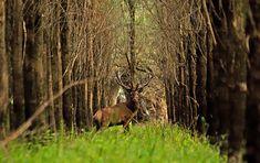 Moose, Animals, Animales, Animaux, Mousse, Animal, Animais, Elk