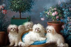 Jean Jaques Bachelier (1724 - 1806) gave us this jewel of a painting, in the best style of the grand french painters he was one of. This painting is very valuable for us, since it shows our Maltese as they looked like  260 years ago. You see several colors , from a light creme over apricot ears to chocolate colored ears, expressive eyes like they have nowadays, small, but not too small bodies and a gorgeous coat. Its also nice to see how a doggie bed for our pampered jewels looked centuries ago