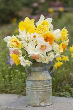 The Meaning Behind Popular Valentine's Day Flowers - Daffodils Flower Meanings - Daffodil Craft, Daffodil Day, Daffodil Bulbs, Daffodil Flowers, Romantic Flowers, Exotic Flowers, Beautiful Flowers, Beautiful Soul, Purple Flowers