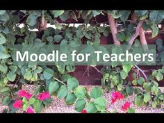 Join the Moodle for Teachers teacher training events in 2015, today.