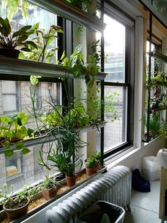 Window garden. Perfect for my urban apartment sans balcony.
