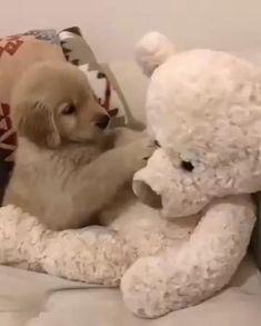 puppies wearing pajamas \ puppies in pajamas ; puppies in pajamas golden retriever ; puppies in pajamas baby ; french bulldog puppies in pajamas ; pitbull puppies in pajamas ; puppies with pajamas ; bulldog puppies in pajamas Super Cute Puppies, Cute Baby Dogs, Cute Little Puppies, Cute Funny Dogs, Cute Dogs And Puppies, Cute Little Animals, Cute Funny Animals, Puppies Puppies, Doggies