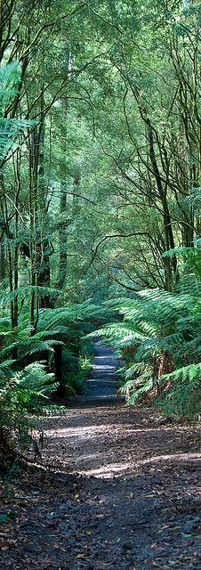 Great Otway National Park Forest, Melbourne, Australia **
