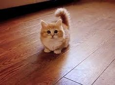 the most adorable cat ever.