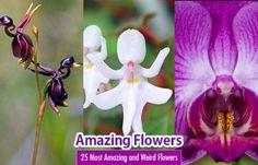 t-amazing-flowers