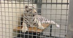 Animal Legal Defense Fund Files Anti-SLAPP Motion Against Landry's Defamation Suit