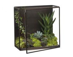 Nalini Shadow Box Terrarium  -Crate & Barrel.   Terrariums in general.. hmm...