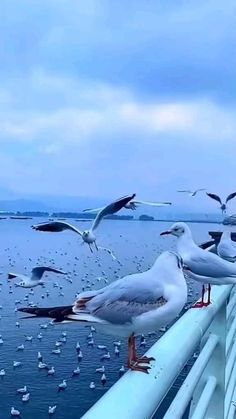 Photo Background Images Hd, Photo Backgrounds, Beautiful Photos Of Nature, Beautiful Birds, Rain Photography, Travel Photography, Good Morning Images Flowers, Blue Sky Clouds, Nature Activities