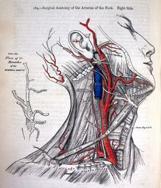 """Anatomy: Descriptive and Surgical,"" was written by the British anatomist and surgeon Henry Gray in 1858.    ""It was the first time that somebody ever sat down and really comprehensively put together this kind of atlas of the human body,"" said medical student Lujia Zhang, who studies at UCLA and Charles Drew University. ""Even right now, it's far more detailed than most anatomy books."""
