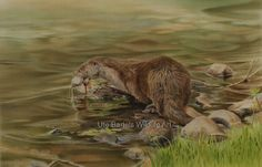 """""""Fischotters Fang"""" (Otters Catch) Silkpainting, 55 x 65 cm Wildlife Art, Brown Bear, Otters, Artist, Painting, Animals, American, Silk Painting, Nature"""