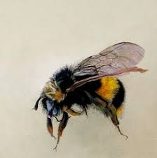 Image result for Scientific illustration bee