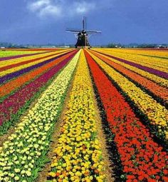 Keukenhof Gardens near Lisse, the Netherlands, started this weekend with its Van Gogh year!