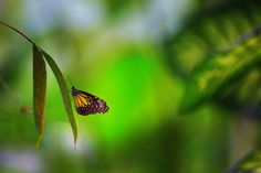 Photo Little Butterfly by Muhammad AlMuhammady on 500px
