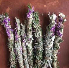 Homegrown lavender, rosemary, Mexican sage, and white sage.   Come make medicine with us! http://chestnutherbs.com/online-herbal-classes/herbal-medicine-making-course/