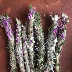 Homegrown lavender,