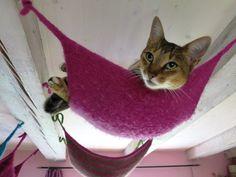 Klettergerüst Für Katzen Selber Bauen : Fritzis katzenpension alles für die katz favorites
