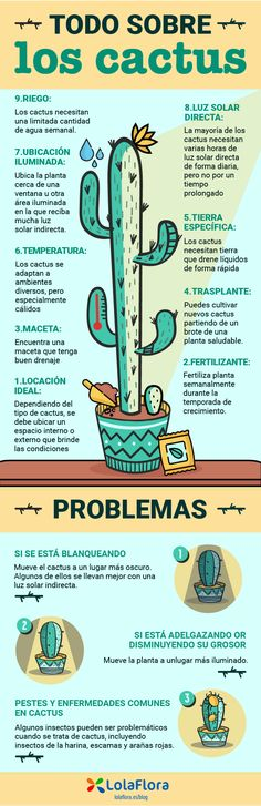 Infographic- tips for growing a healthy cactus