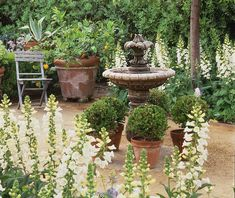 Garden Designs Ideas 2018 : In this garden, a path of decomposed granite is lined with banks of towering foxglove and punctuated with a tiered fountain circled by pots of boxwood globes. Trinity Homes, Landscape Design, Garden Design, Side Garden, White Gardens, Flowers Perennials, Better Homes And Gardens, Decomposed Granite, Old Houses