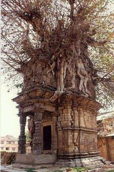Abandoned In Ruins Crypt Overrun By A Tree, In Katmandu, Nepal Check us out on Fb- Unique Intuitions Abandoned Buildings, Abandoned Mansions, Old Buildings, Abandoned Places, Architecture Antique, Drawing Architecture, Haunted Places, Spooky Places, Belle Photo