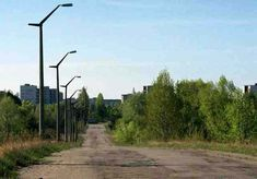chernobyl forest - Google Search