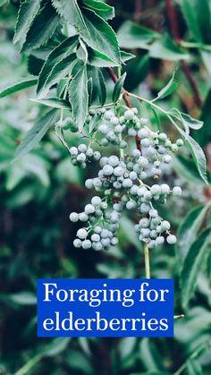 Edible Plants, Edible Garden, Healing Herbs, Medicinal Plants, Wild Edibles, Growing Herbs, Herbal Medicine, Home Interior, Garden Plants