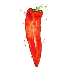 Amy Holliday Illustration : Study // The Finest Red Ramiro Sweet Pointed Peppers