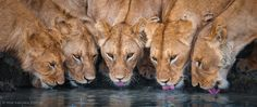 Let's put our heads togeather by Wim van den Heever, via 500px