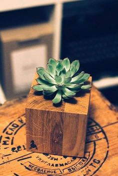 Wood & Succulent by Goosucc #goosucc #goosucculents #wood #succulents #plants #gifts #madeinukraine #kyiv #homedecor #oak #echeveria