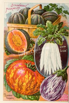 083-Radish, Musk Melon, Egg Plant, Tomato ...
