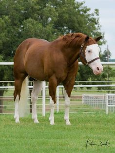American Paint Horse Stallion the late Colonels Smoking Gun better known as Gunner. One of the best horses to ever grace the planet.