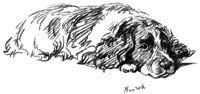 springer spaniel sketch | sketch-down.jpg (9194 bytes)